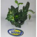 AQUA NOVA Plastová rastlina (78453)